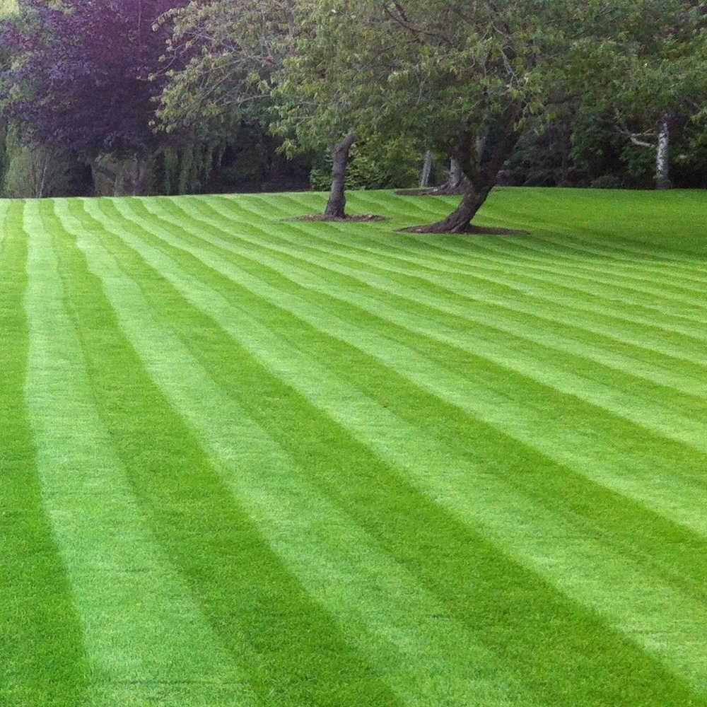 välj rätt gräsmatta